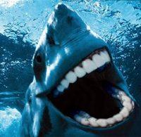 11 Especies de tiburón que NO conoces + BONUS al final.